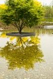 Los árboles del parque, agua, plantas y la reflexión en el agua Imagen de archivo