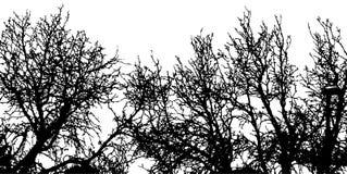 Los árboles del vector siluetean el fondo de la naturaleza foto de archivo libre de regalías