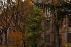 Los árboles delante del edificio industrial grande del ladrillo rojo Imágenes de archivo libres de regalías