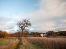 Los árboles desnudos de la rama del otoño ajardinan las cañas de oro de las cañas de la caída foto de archivo