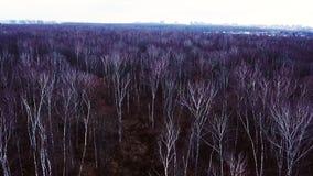 Los árboles desnudos del paisaje aéreo sin follaje en bosque del otoño el invierno de la víspera sazonan almacen de metraje de vídeo