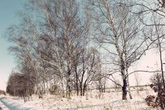 Los árboles desnudos en la nieve/el invierno rural ajardinan/ Foto de archivo