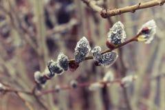 Los árboles despiertan después de invierno en lluvia fotografía de archivo libre de regalías