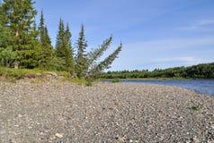 Los árboles doblados abajo al río son paisaje típico del taiga Imágenes de archivo libres de regalías