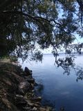 Los árboles doblados sobre el agua foto de archivo