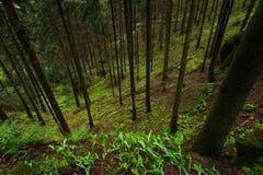 Los árboles en bosque Fotos de archivo