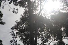 Los árboles en bosque cuentan la puesta del sol fotos de archivo