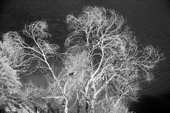 Los árboles en el agua Fotografía de archivo