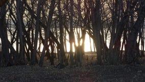 Los árboles en el banco Fotos de archivo libres de regalías