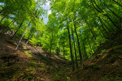 Los árboles en el bosque Imagen de archivo libre de regalías