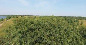 Los árboles en el campo almacen de metraje de vídeo