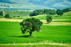 Los árboles en el campo Fotos de archivo libres de regalías