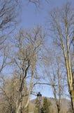 Los árboles en el cielo de Sinaia recurren en Rumania Imagenes de archivo