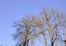Los árboles en el cielo de Sinaia recurren en Rumania Foto de archivo