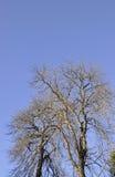 Los árboles en el cielo de Sinaia recurren en Rumania Imágenes de archivo libres de regalías