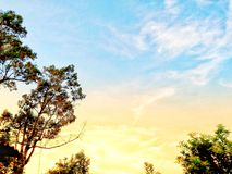 Los árboles en el fron de cielos azules imagenes de archivo
