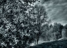 Los árboles en el hill-2 Imagenes de archivo