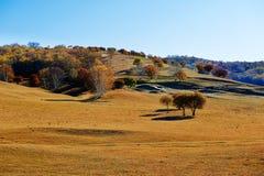 Los árboles en el prado Fotografía de archivo libre de regalías