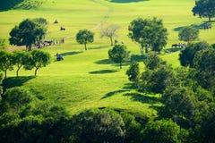 Los árboles en el prado Imágenes de archivo libres de regalías