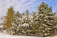 Los árboles en el pueblo de Urales, cubierto con nieve temprana Imágenes de archivo libres de regalías