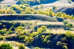 Los árboles en la ladera de la presa del sapo Fotos de archivo