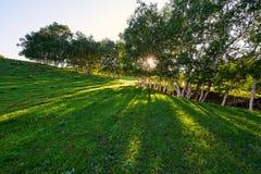 Los árboles en la puesta del sol de los prados Fotografía de archivo