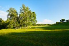 Los árboles en la puesta del sol de los prados del verano Fotografía de archivo