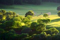 Los árboles en la puesta del sol del prado Imagenes de archivo