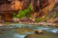 Los árboles en la Virgen estrechan el río en Zion National Park Foto de archivo libre de regalías