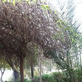 los árboles en la yarda Imagen de archivo