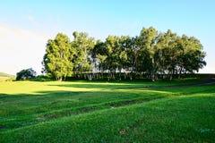 Los árboles en los prados del verano Fotografía de archivo libre de regalías