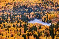 Los árboles en otoño Foto de archivo libre de regalías