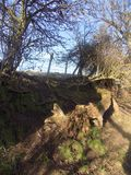 Los árboles en país caminan, Northumberland del norte, Reino Unido Fotografía de archivo