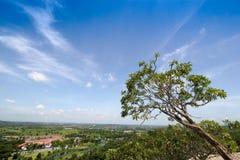 Los árboles en un fondo del cielo azul con las nubes Foto de archivo libre de regalías