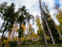 Los árboles están creciendo al cielo fotos de archivo