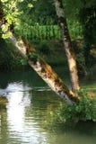Los árboles están creciendo en el borde de un arroyo en el campo cerca del Coly (Francia) Imagen de archivo