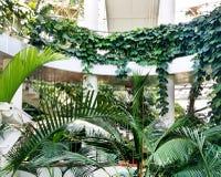 Los árboles exóticos tropicales palma e hiedra de las plantas crecen el naranjal interior, poder de la naturaleza imagen de archivo libre de regalías