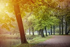Los árboles forestales ajardinan en parque con brillo amarillo del sol entre las hojas en la estación del otoño Imagen de archivo