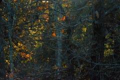 Los árboles forestales gruesos de la montaña proporcionan una cortina delante de la luz pasada del sol del día imagen de archivo libre de regalías