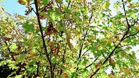 Los árboles forestales siluetean y las hojas del verano de la primavera del verde en el cielo de la luz del día con los rayos de  metrajes