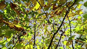 Los árboles forestales siluetean y las hojas del verano de la primavera del verde en el cielo de la luz del día con los rayos de  almacen de video