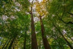 Los árboles grandes de Joyce Kilmer Memorial Foto de archivo