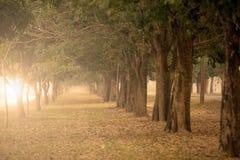 Los árboles grandes en ambos lados Fotografía de archivo libre de regalías