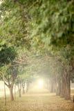 Los árboles grandes en ambos lados Foto de archivo