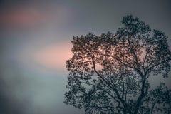 Los árboles grandes en fondo del cielo en puesta del sol Imagen de archivo