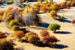 Los árboles hermosos del otoño Imágenes de archivo libres de regalías