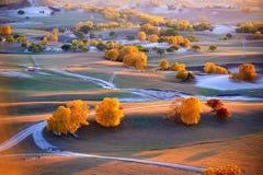 Los árboles hermosos en la puesta del sol del prado Fotografía de archivo libre de regalías