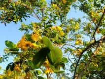 Los árboles hermosos ponen verde el fondo de la flor amarilla y del cielo azul Imagen de archivo libre de regalías