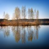 Los árboles jovenes se reflejan en agua del lago Foto de archivo libre de regalías