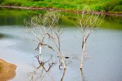 Los árboles muertos en agua Imagen de archivo libre de regalías